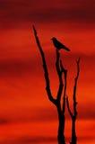 Het Silhouet van de zonsondergang Stock Afbeeldingen