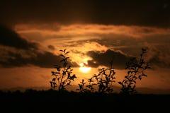 Het silhouet van de zonsondergang van royalty-vrije stock foto
