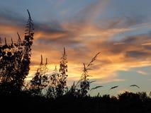 Het Silhouet van de zonsondergangbloem Royalty-vrije Stock Foto's