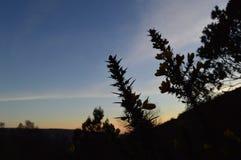 Het Silhouet van de zonsondergangbloem Stock Afbeeldingen