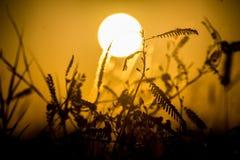 Het silhouet van de zonsondergangdroom royalty-vrije stock foto