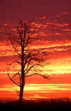 Het Silhouet van de zonsopgang Stock Afbeelding