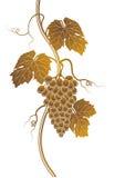 Het silhouet van druiven Stock Foto