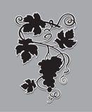 Het silhouet van druivenbossen stock illustratie
