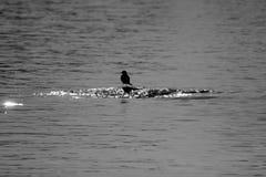 Het silhouet van een vogel op een rots Royalty-vrije Stock Fotografie