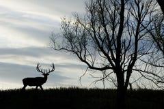 Het Silhouet van elanden Stock Afbeelding