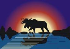 Het silhouet van elanden met bezinning Royalty-vrije Stock Fotografie