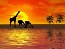 Het silhouet van giraffen Stock Foto's