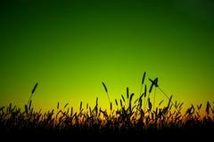 Het silhouet van het gras Royalty-vrije Stock Afbeeldingen