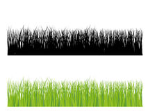 Het silhouet van het gras in kleur en zwarte Stock Afbeeldingen