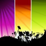 Het silhouet van het gras op weide Stock Afbeeldingen