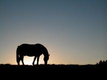 Het silhouet van het paard stock afbeeldingen
