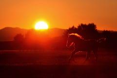 Het silhouet van het paard Stock Foto's