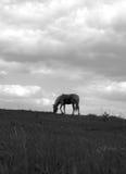 Het silhouet van het paard Royalty-vrije Stock Afbeeldingen