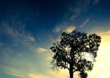 Het silhouet van het panorama van een eenzame boom bij zonsondergang stock foto