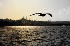 Het silhouet van Istanboel Stock Fotografie