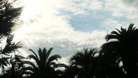 Het silhouet van palm vertakt zich tegen de hemel in heet weer, exemplaarruimte 4K stock video