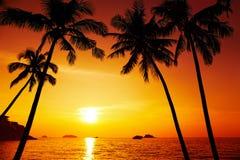 Het silhouet van palmen bij zonsondergang Stock Foto