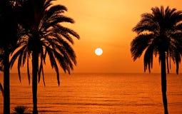 Het silhouet van palmen bij zonsondergang Royalty-vrije Stock Foto's