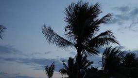 Het silhouet van palmen bij zonsondergang Donkere scène Nacht op het magische tropische eiland van Bali, Indonesië Onuitgegeven l stock footage