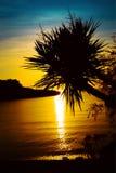 Het silhouet van palmen op zonsondergang tropische beach Stock Foto's