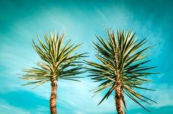 Het silhouet van palmen op zonsondergang tropische beach Stock Foto