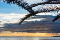 Het silhouet van palmtakken door het overzees bij zonsondergang royalty-vrije stock afbeelding