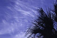 Het Silhouet van Sabal Stock Afbeelding