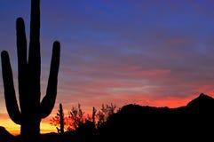 Het Silhouet van Saguaro Royalty-vrije Stock Afbeeldingen