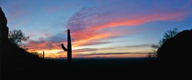 Het Silhouet van Saguaro Stock Foto's