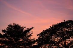 Het silhouet van tak twee boom in zonsondergang royalty-vrije stock afbeeldingen