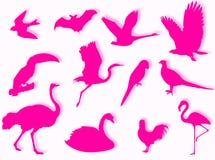Het silhouet van vogels Stock Afbeelding