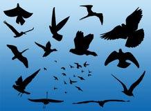 Het silhouet van vogels Stock Foto