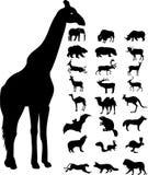Het silhouet van wilde dieren Royalty-vrije Stock Foto's