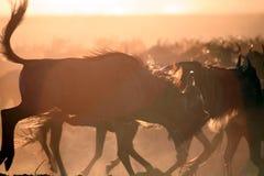 Het Silhouet van Wildebeest (Kenia) Stock Foto