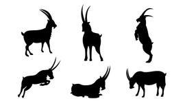 Het silhouet vectorreeks van het geitkarakter royalty-vrije illustratie