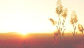 Het silhouet vertroebelt gele hemelbehang en achtergrond Royalty-vrije Stock Foto