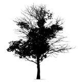Het silhouetzwarte van de boom vector illustratie