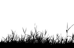 Het silhouetzwarte van het gras Royalty-vrije Stock Foto