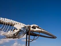 Het Skelet Fuerteventura van de walvis Stock Foto's