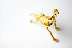 Het skelet van de dinosaurus royalty-vrije stock foto