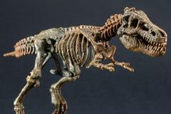 Het skelet van de dinosaurustyrannosaurus T Rex op zwarte achtergrond royalty-vrije stock fotografie