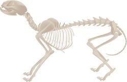 Het skelet van de hond vector illustratie