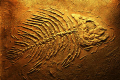 Het skelet van de piranha Stock Foto's