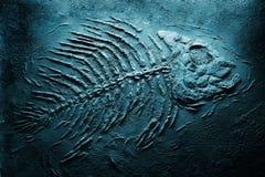 Het skelet van de piranha onderwater Stock Fotografie