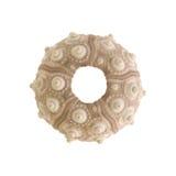 Het skelet van de zeeëgel Royalty-vrije Stock Afbeelding