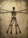 Het skelet van Grunge Stock Foto's
