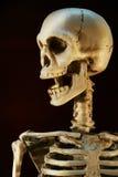 Het skelet van Halloween stock afbeeldingen