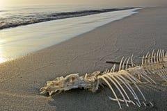 Het skelet van vissen Stock Fotografie