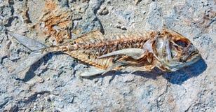 Het skelet van vissen Stock Afbeelding